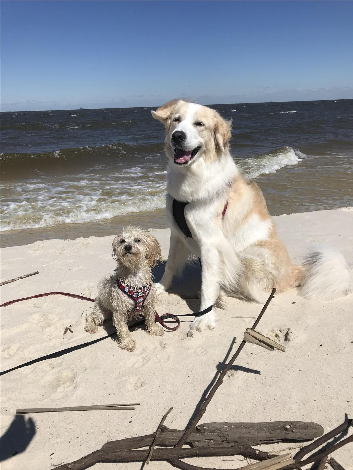 Sandy Pups!