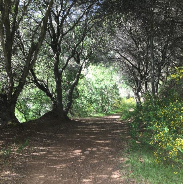 Leona trail