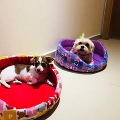 dog keepers