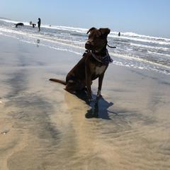 North Dog Beach