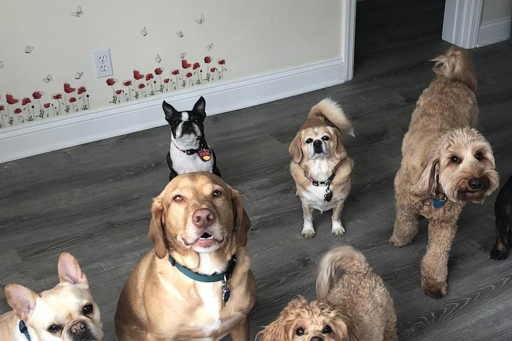 Pet Friendly The Dog Nannies & Co.