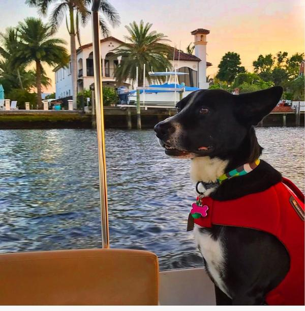 Pet Friendly Intimate Waterway Tours