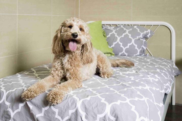 Pet Friendly Pooch Hotel Sunnyvale