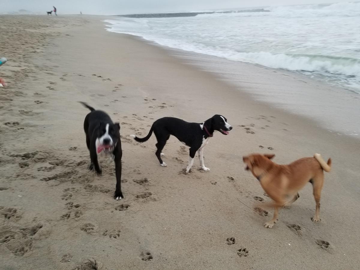 Duke Roxy and Luna