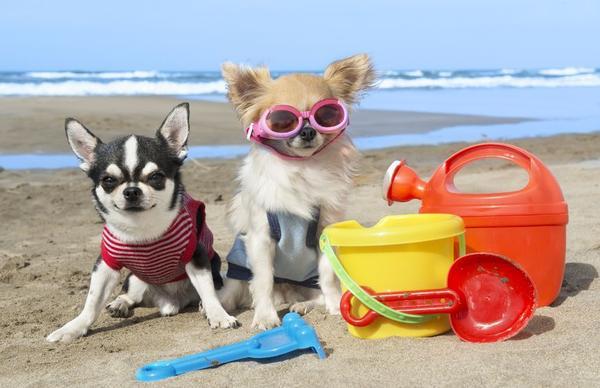 Pet Friendly StayCare Pet Sitting