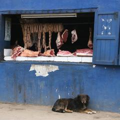 Dog Waiting Outside a Butcher Shop in Madagascar