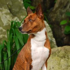Dog Sitting on Stone in the Democratic Republic of Congo