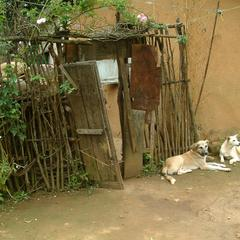 Two Dogs Lounging Outside a Door in Madagascar
