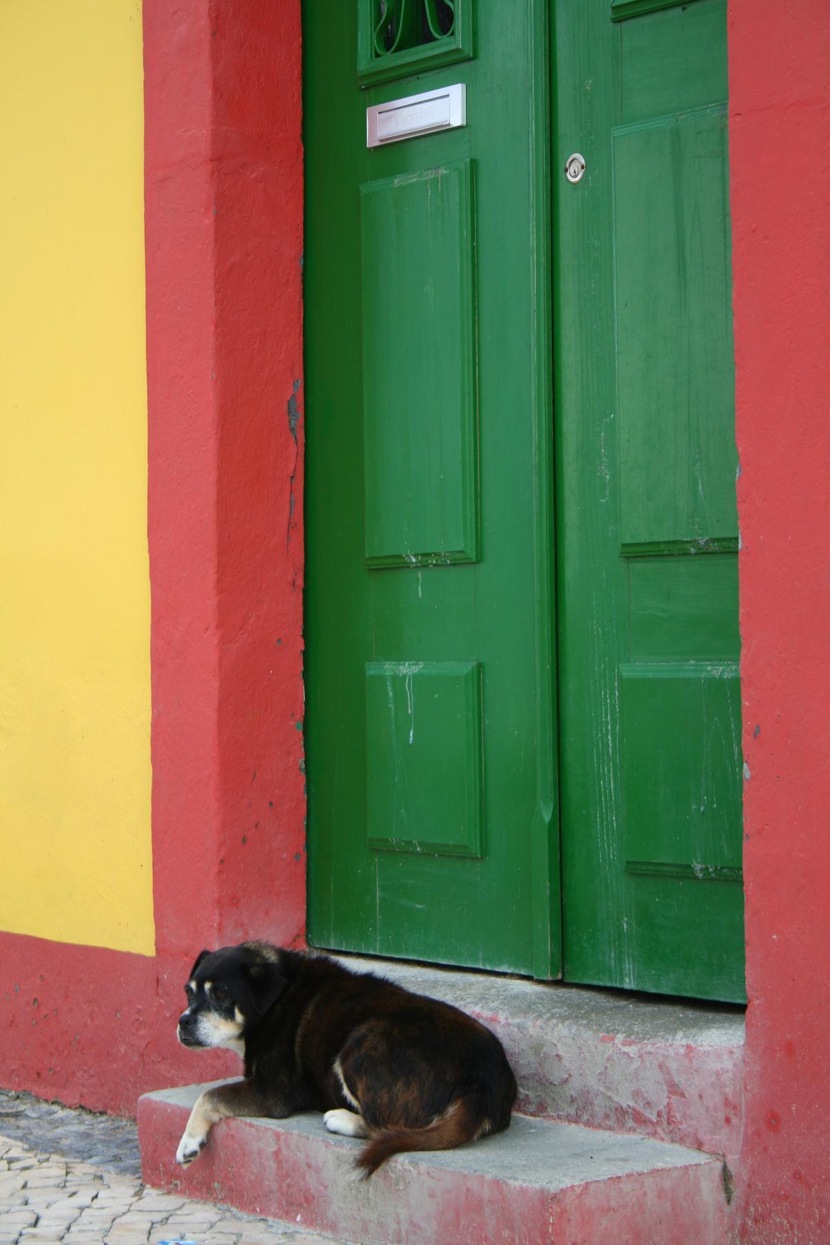 Dog at Colorful Doorway in Ethiopia.