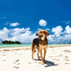 Dog Stands on the Beach in Seychelles