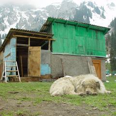 Dog Sleeps Outside a Shelter