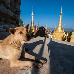 Dog at Shwe Indein Pagodas