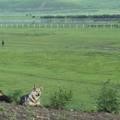 Shepherd On Watch