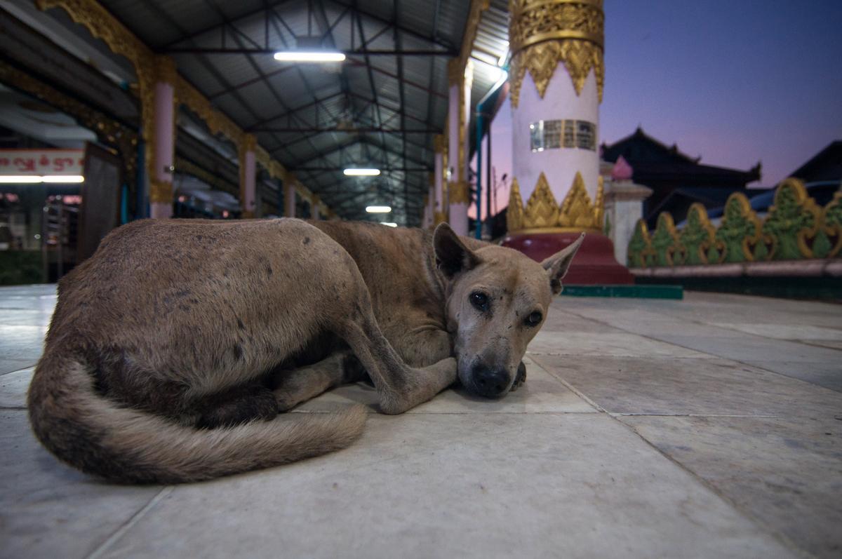 Dog Rests Under a Shelter