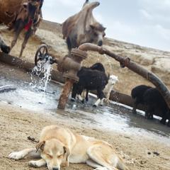 Dog Sleeps Next to Water Spigot