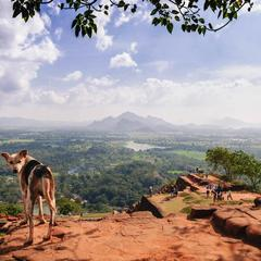 Dog Stands on Sigiriya Rock Looking Back