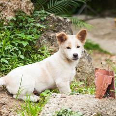 Puppy Stands in Weeds
