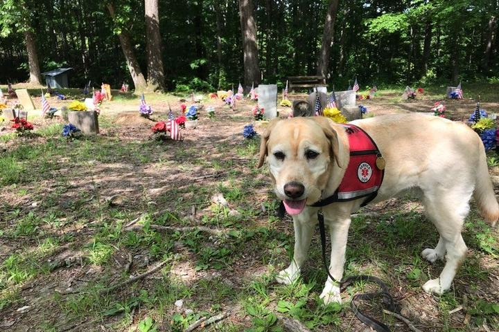Dog Owner's Guide to Tuscumbia, AL