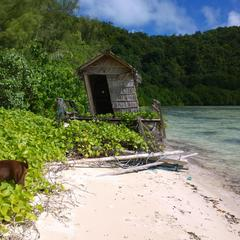 Dog Digs in Plants in Palau