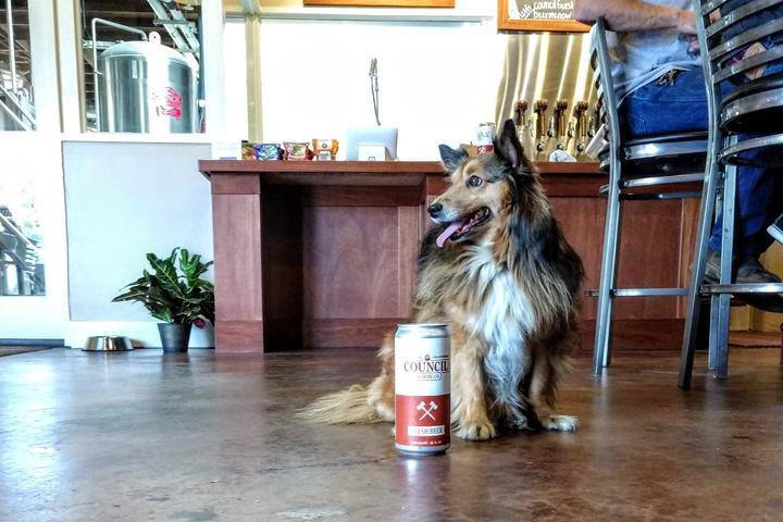 Pet Friendly Council Brewing Co.