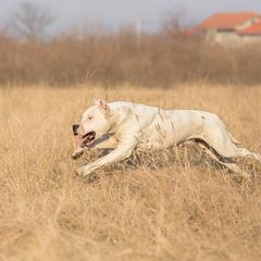 Dog Leaps Through the Air