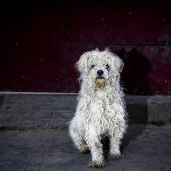 Scruffy Dog Sits in the Dark