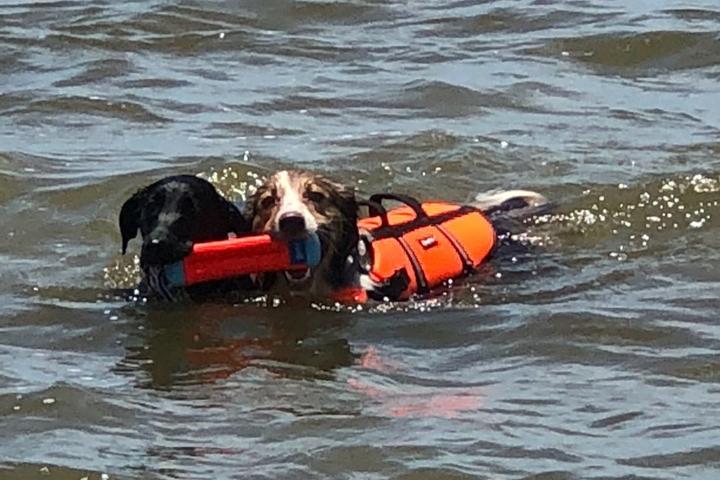 Dog Owner's Guide to Ocean Springs, MS