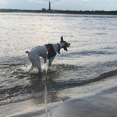 Lucy at New Smyrna