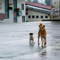 Dogs in a Parking Lot