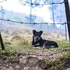 Dog Lies Behind a Fence