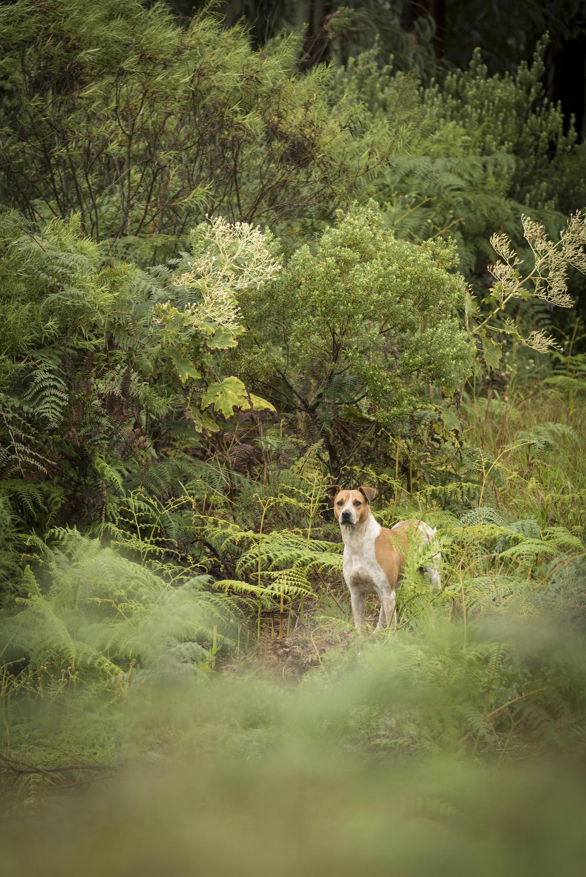 Dog Stands in Ferns