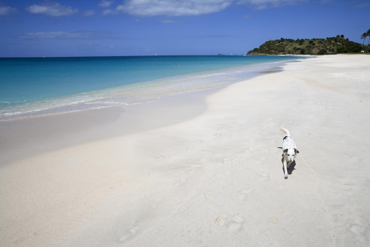 Dog Runs Along Turquoise Beach