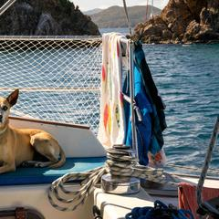 Dog Lies on a Boat
