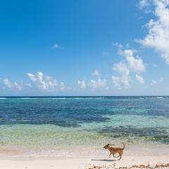 Dog Runs on a Beautiful Beach