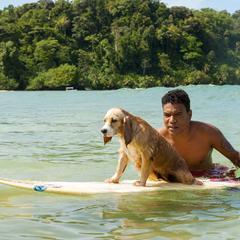 Dog Sits on a Surf Board