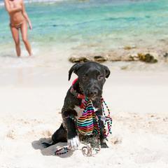 Dog Holds Woman's Bikini Top