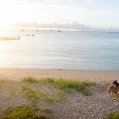 Dogs Play on a Beach in Sun