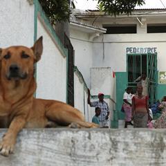 Dog at a Pediatric Center