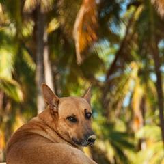 Dog Beneath Palm Leaves
