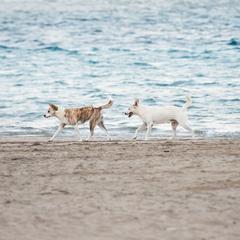 Dogs Walk in Line