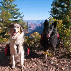 Dogs Ready to Hike the Grand Canyon