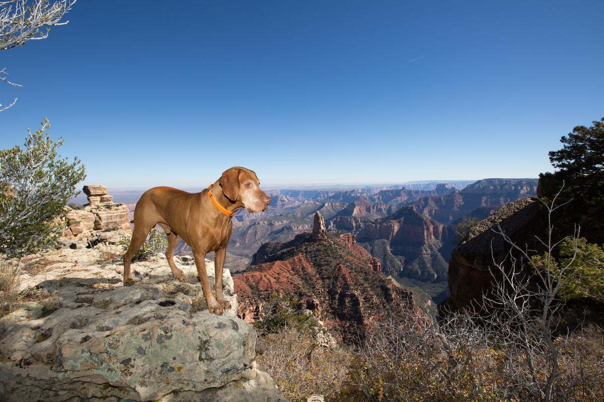 Enjoying Grand Canyon Views