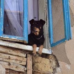 Dog in window in Bosnia