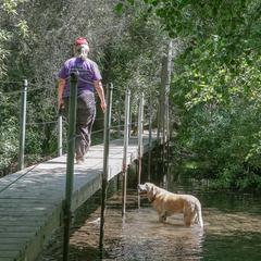 Dog Watches Woman on Bridge