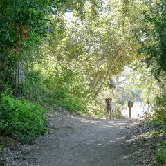 Dog on a Garland Ranch Trail