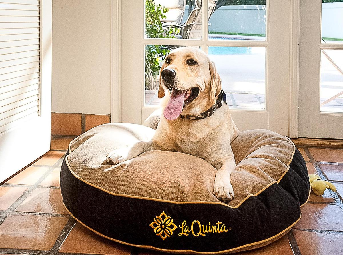Dog Enjoys a Custom Hotel Dog Bed