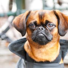 Cute dog in Belgium