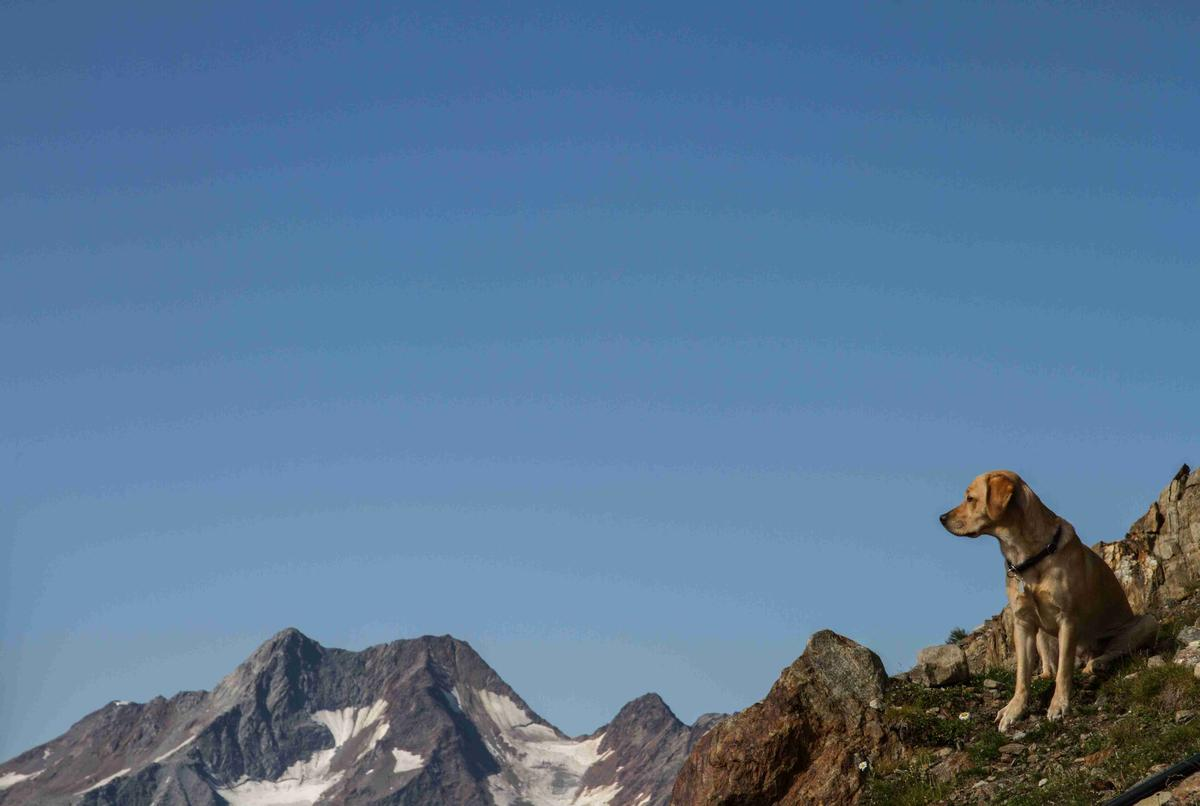 Hiking in the Alps with a Dog