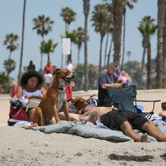 Sunbathing on the Beach with a Dog