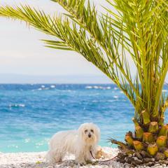 Dog in the Adriatic Sea